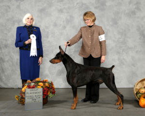 Magnum Group Doberman